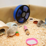 10 Best Hedgehog Accessories - Everything You Need To Know