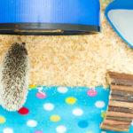 Hedgehog Bedding: How To Make Them Comfortable