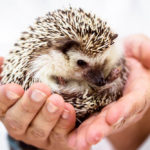 Hedgehog Care - Everything You Need To Know