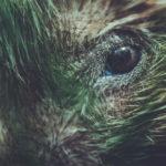Hedgehog Eyes: Eyesight, Care Guide & Health Issues