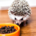 Hedgehog Food: What Can And Can't They Eat?
