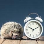 Hedgehog Life Expectancy: How Long Do They Live?